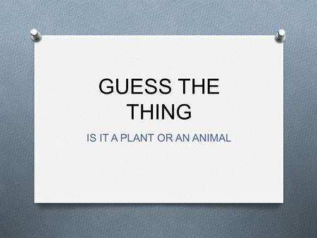GUESS THE THING IS IT A PLANT OR AN ANIMAL. GUESS WHAT O Used at Christmas O Hold lights O Put presents under this.