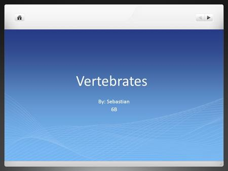 Vertebrates By: Sebastian 6B. What are vertebrates? Vertebrates are living organisms that have a vertebrate so they have a back bone. In the vertebrate.