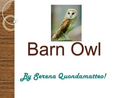 Barn Owl Barn Owl By Serena Quondamatteo! What do they look like? Barn owls have a large heart shaped face that is completely white, black eyes and very.