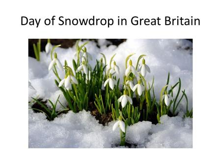 Day of Snowdrop in Great Britain. Day of Snow drop was celebrated 19 th of April since 1984. In first sunny days this flower appears under snow. It is.