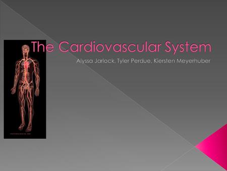  The Heart  Blood Vessels(veins, arteries, etc.)  Blood also plays a very important role.