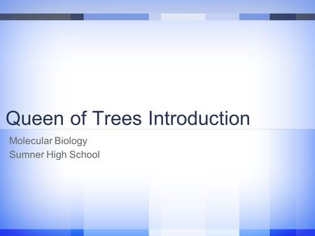 Queen of Trees Introduction