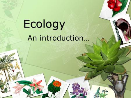 "Ecology An introduction…. Question Are organisms, including humans, ""islands"". Why or why not? Support your answer."