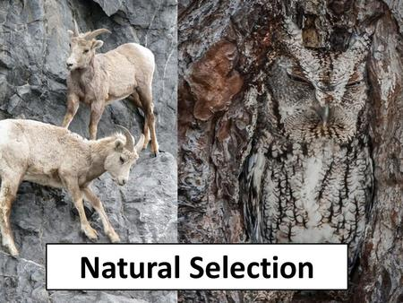 Natural Selection. On the Origin of Species by Means of Natural Selection or the Preservation of Favoured Races in the Struggle for Life This is quite.