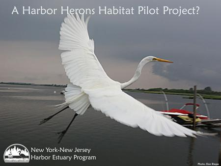 A Harbor Herons Habitat Pilot Project? Photo: Don Riepe.