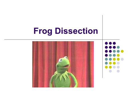 Frog Dissection. Rules 1. Do not use any of the sinks! 2. Do not leave your seats once dissection begins. 3. Do not run, play or roughhouse! 4. Be extremely.