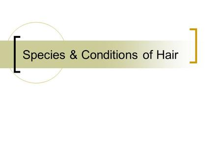 Species & Conditions of Hair. Human Hairs Horse Hair.