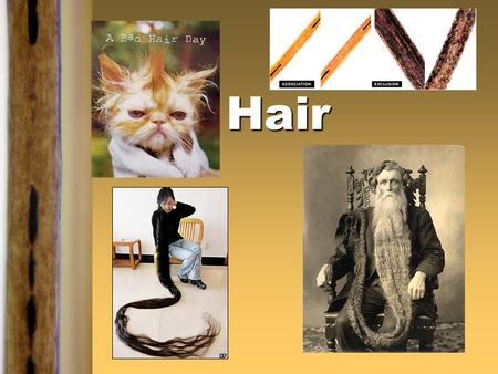Hair Extra-Credit ‡Bring in some animal hair (pets) ‡About 20 hairs ‡No roadkill samples!