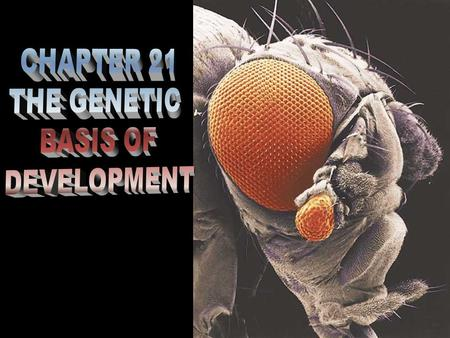 CHAPTER 21 THE GENETIC BASIS OF DEVELOPMENT.
