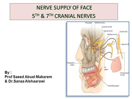 NERVE SUPPLY OF FACE 5TH & 7TH CRANIAL NERVES
