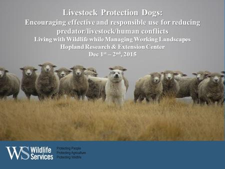 Protecting People Protecting Agriculture Protecting Wildlife Livestock Protection Dogs: Encouraging effective and responsible use for reducing predator/livestock/human.