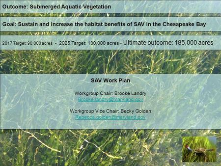 Outcome: Submerged Aquatic Vegetation Goal: Sustain and increase the habitat benefits of SAV in the Chesapeake Bay 2017 Target: 90,000 acres - 2025 Target: