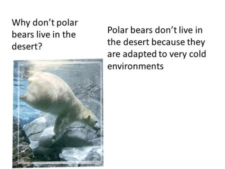 Why don't polar bears live in the desert? Polar bears don't live in the desert because they are adapted to very cold environments.