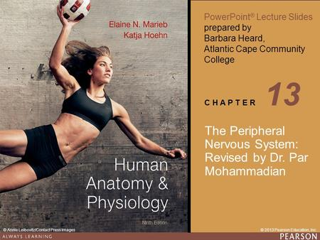 13 The Peripheral Nervous System: Revised by Dr. Par Mohammadian.