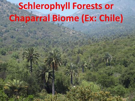 Schlerophyll Forests or Chaparral Biome (Ex: Chile)