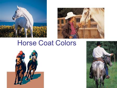 Horse Coat Colors. Bay