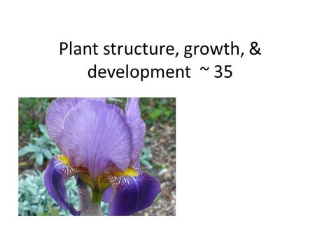 Plant structure, growth, & development ~ 35. 1. Plants have a hierarchical organization consisting of organs, tissues, and cells 3 basic organs – Roots,