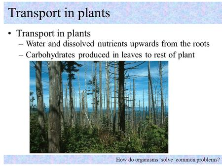 Transport in plants Transport in plants