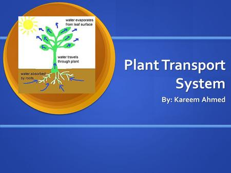 <strong>Plant</strong> <strong>Transport</strong> System By: Kareem Ahmed. <strong>Plant</strong> <strong>Transport</strong> System The <strong>plant</strong> <strong>transport</strong> system uses many different thin tubes inside it that carry liquids.