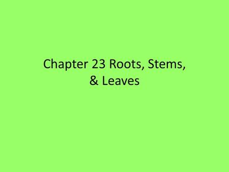 Chapter 23 Roots, Stems, & Leaves