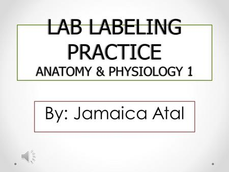 LAB LABELING PRACTICE ANATOMY & PHYSIOLOGY 1