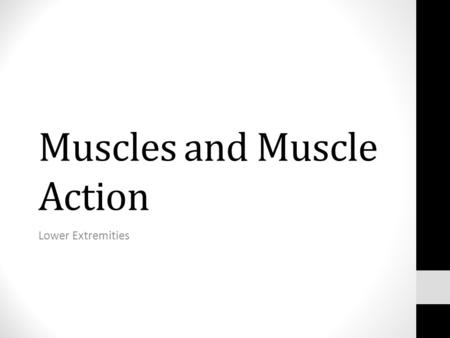 Muscles and Muscle Action Lower Extremities. Muscles that Move… The Lower Extremities: The Coxal joint/thigh Thigh muscles that move the knee joint/leg.