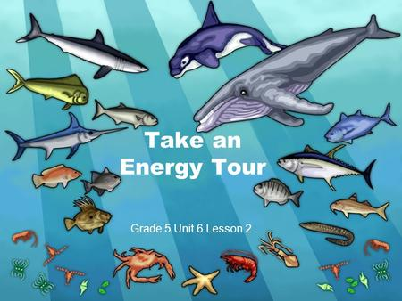 Take an Energy Tour Grade 5 Unit 6 Lesson 2. Food Chain large shark mahi mackerel small fish zooplankton phytoplankton Flow of Energy.