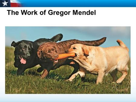 The Work of Gregor Mendel. Essential Question:  Describe Mendel's studies and conclusions about inheritance. 