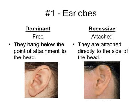 #1 - Earlobes Dominant Free