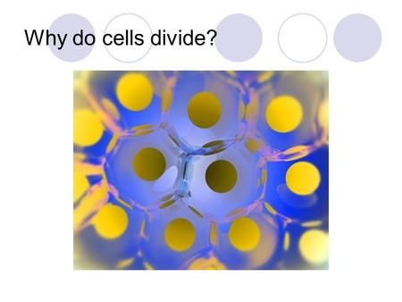 Why do cells divide?. Cells divide to maintain a workable volume to surface area ratio.