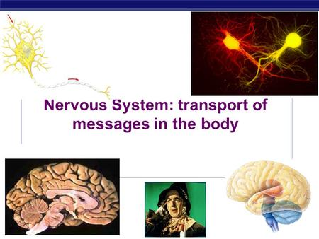 Nervous System: transport of messages in the body.