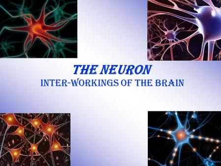 The Neuron Inter-workings of the Brain. Drill #22 Draw the neuron. Label it correctly with the following parts: –Soma –Dendrites –Axon –Myelin Sheath.