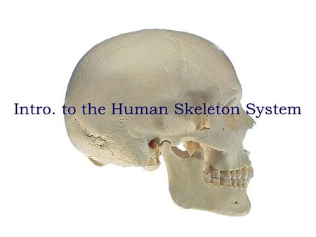 Anatomy and Physiology Bio 110 lab quiz study guide Intro. to the Human Skeleton System.