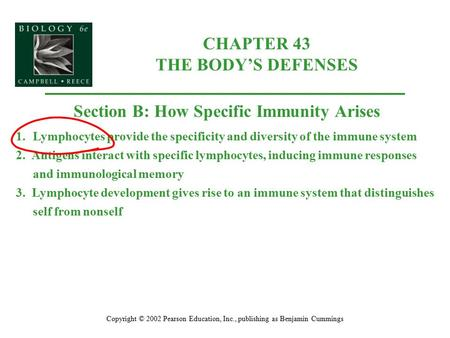 CHAPTER 43 THE BODY'S DEFENSES Copyright © 2002 Pearson Education, Inc., publishing as Benjamin Cummings Section B: How Specific Immunity Arises 1.Lymphocytes.