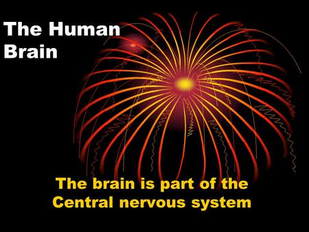 The Human Brain The brain is part of the Central nervous system.