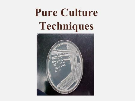 Pure Culture Techniques. Pure Culture Consists of only a single type of organism. When working in the laboratory, we need to work with a single species.