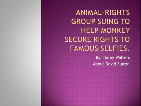 By: Haley Walters About David Slater..  Opinion: I think monkeys should be able to own there own selfies/pictures.  Fact: The photos were taken in 2011.