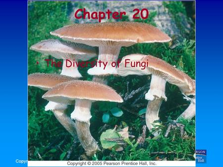 Copyright © 2005 Pearson Prentice Hall, Inc. Chapter 20 The Diversity of <strong>Fungi</strong>.