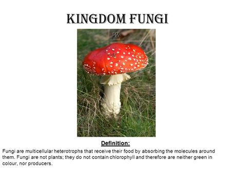 Kingdom FungiDefinition: Fungi are multicellular heterotrophs that receive their food by absorbing the molecules around them. Fungi are not plants; they.