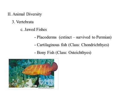 II. Animal Diversity 3. Vertebrata c. Jawed Fishes - Placoderms(extinct – survived to Permian) - Cartilaginous fish (Class: Chondrichthyes) - Bony Fish.