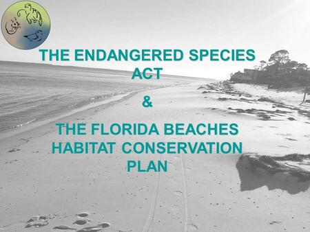 THE ENDANGERED SPECIES ACT & THE FLORIDA BEACHES HABITAT CONSERVATION PLAN.