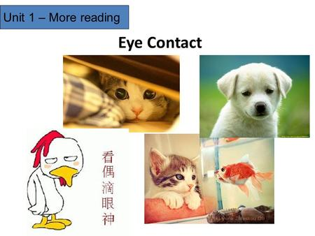 Eye Contact Unit 1 – More reading. Please skim the passage, then match the paragraphs and the synopsis. Body language is more important than words. Problems.