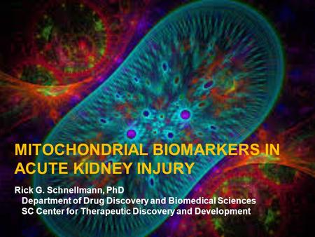 MITOCHONDRIAL BIOMARKERS IN ACUTE KIDNEY INJURY Rick G. Schnellmann, PhD Department of Drug Discovery and Biomedical Sciences SC Center for Therapeutic.