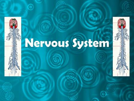 Nervous System. What is the main function of the nervous system? to receive stimuli from inside and outside the body to interpret the stimuli initiate.