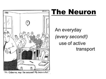 The Neuron An everyday (every second!) use of active transport.