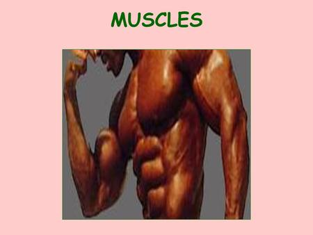 MUSCLES I. GENERAL INFORMATION HOW MUSCLES ARE NAMED LOCATION Ex: TEMPORALIS NUMBER OF ORIGINS Ex: BICEPS BRACHII & TRICEPS BRACHII SIZE Ex: GLUTEUS.