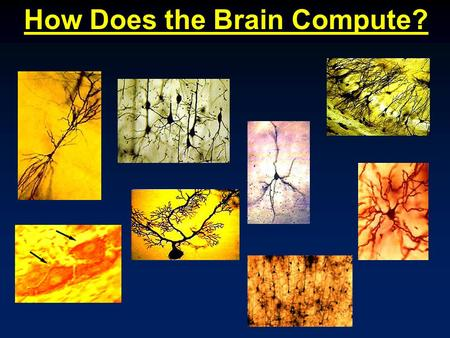 How Does the Brain Compute?. A nerve cell, or a neuron, consists of many different parts.