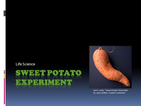 "Life Science Carl E. Lewis. ""Sweet Potato"" November 28, 2007 via flickr. Creative Commons."