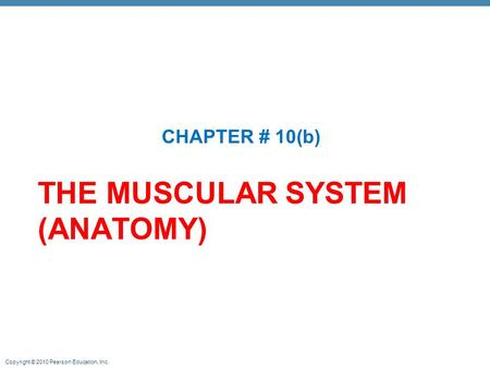 Copyright © 2010 Pearson Education, Inc. THE MUSCULAR SYSTEM (ANATOMY) CHAPTER # 10(b)