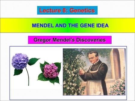 MENDEL AND THE GENE IDEA Gregor Mendel's Discoveries
